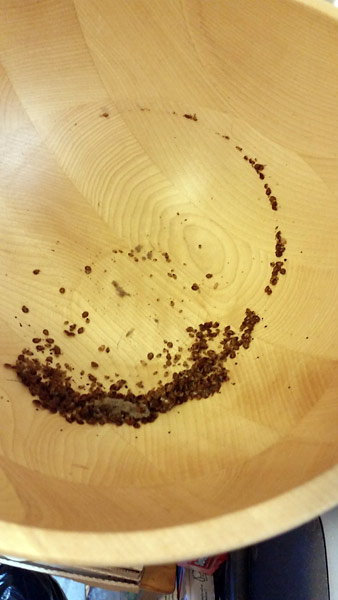 Bedbugs-in-wood-mixing-bowl-kitchen