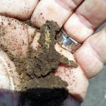 Termites-up-close